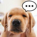 ダイエットしたいならペットと一緒に寝るのは止めよう!